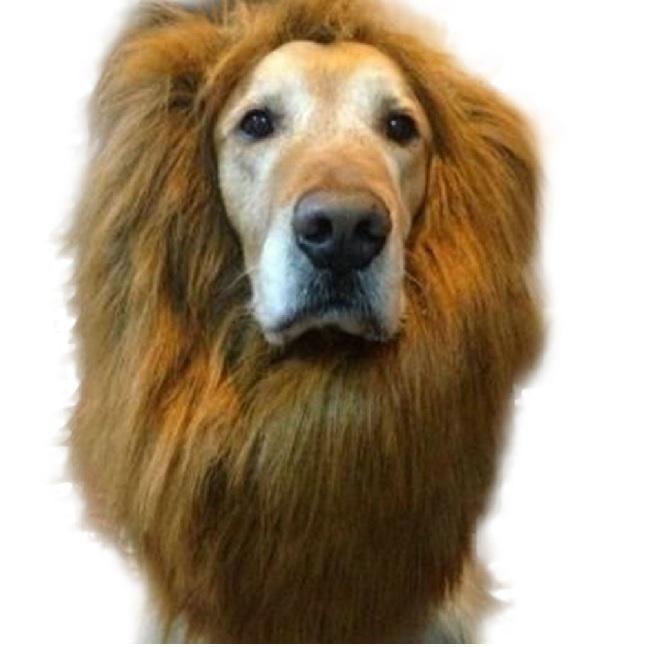 lion-costume