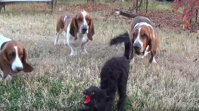 basset-hound-dogs-cat-funny-situation