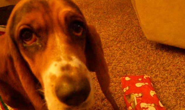 basset-hound-eyes-christmas-gift