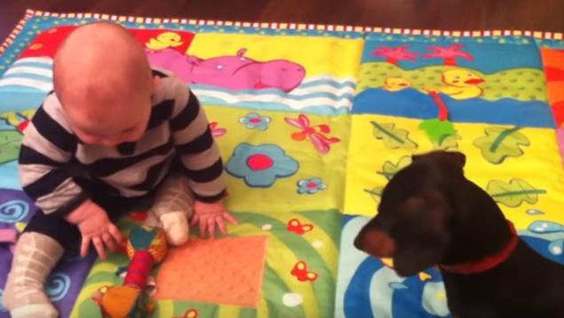 cute-baby-child-dog-dachshund-playing