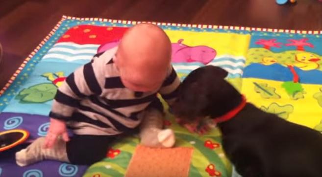 dachshund-baby-dog-play