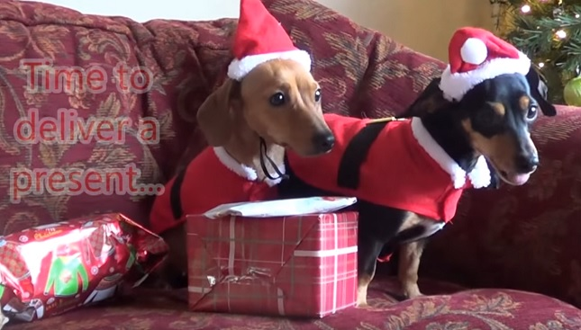 dachshund-present-dogs-christmas