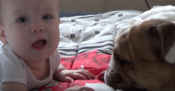 english-bulldog-play-with-baby