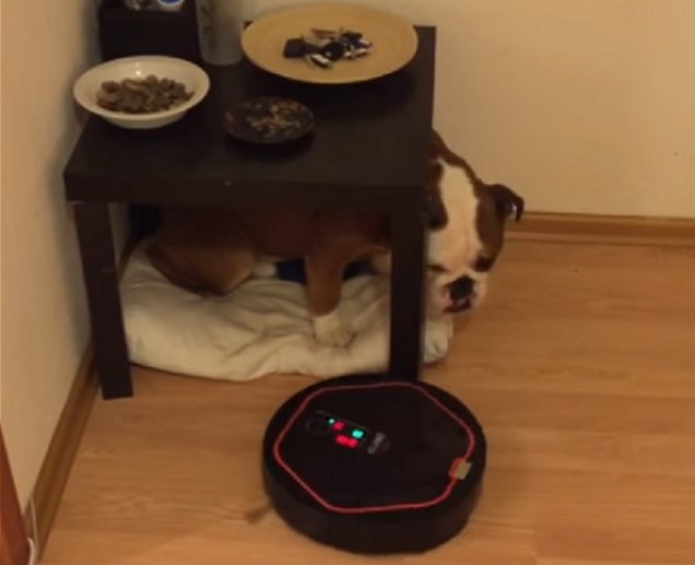 english-bulldog-vacuum-cleaner