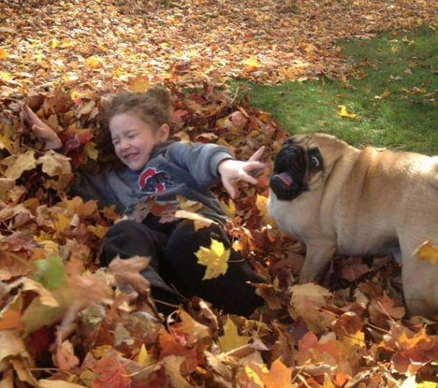 Girl playing in leaves with scared pug