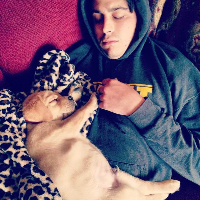 Labrador puppy cuddling man