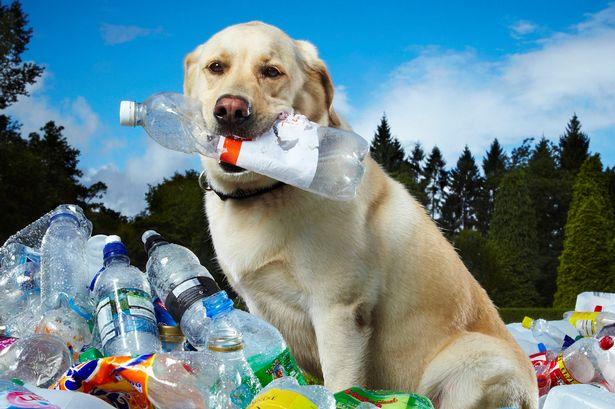 World Record bottles dog Labrador Tubby