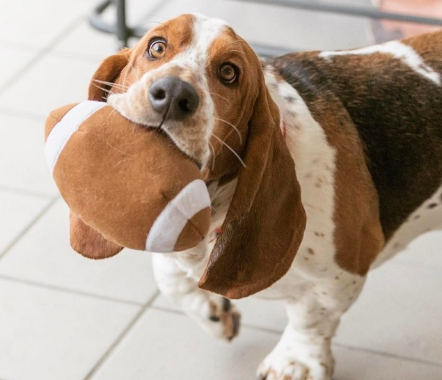 10 Basset Hounds You Should Follow On Instagram