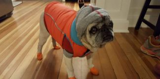pug dog clothes