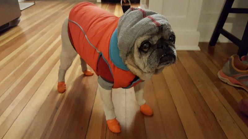 pug dog clothes