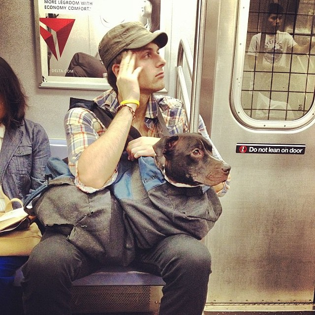7 Tips for Travelling with Pets 19