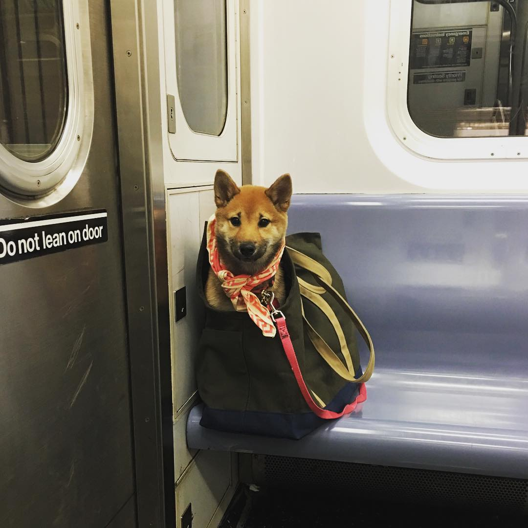 7 Tips for Travelling with Pets 20