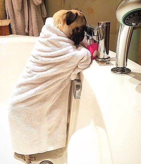How Does Pet Flea Shampoo Work On Fleas 15