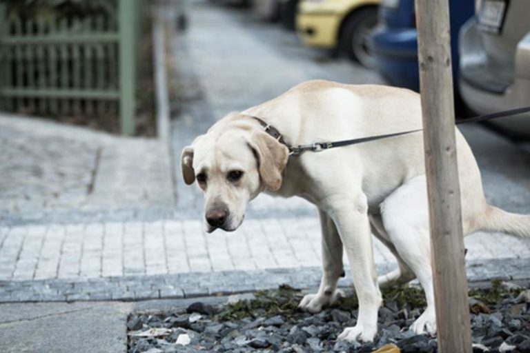Common Dog Health Problems and their Symptoms 4