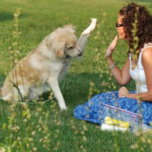 10 Essential Tips for Finding Reputable Dog Breeders