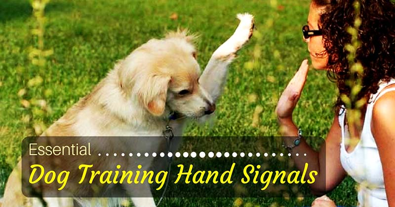 Dog Training Hand Signals – Useful Tips for Pet Parents