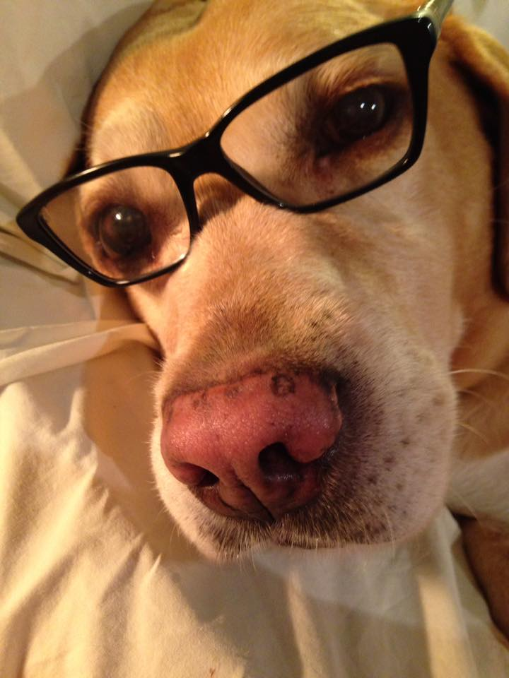 How Smart is Your Dog? 11