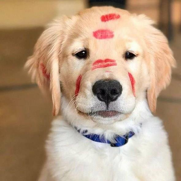 5 Tips to Help Your Puppies Behave Well
