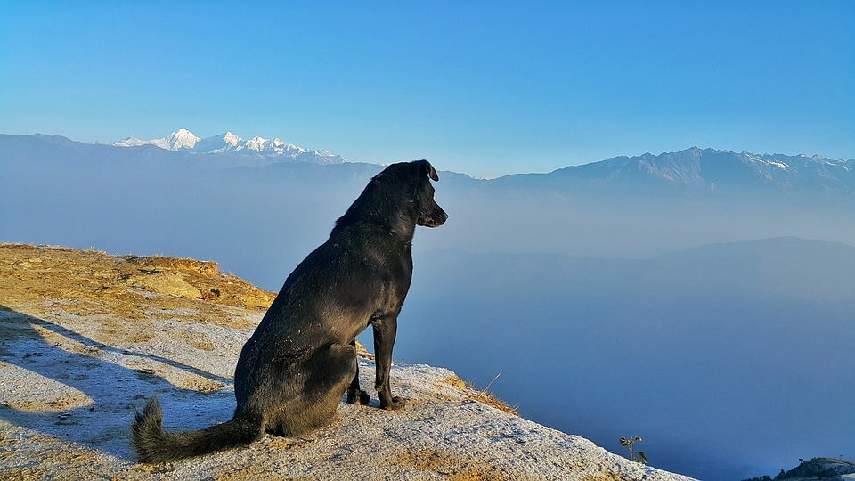 Taking Your Pooch On Vacation? Here's What You Need To Do 3