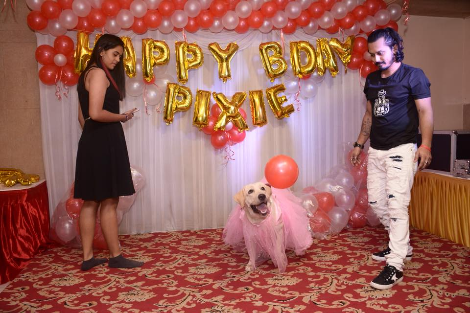 4 Exquisite Tips For a Cool Costume Party With Pets 5