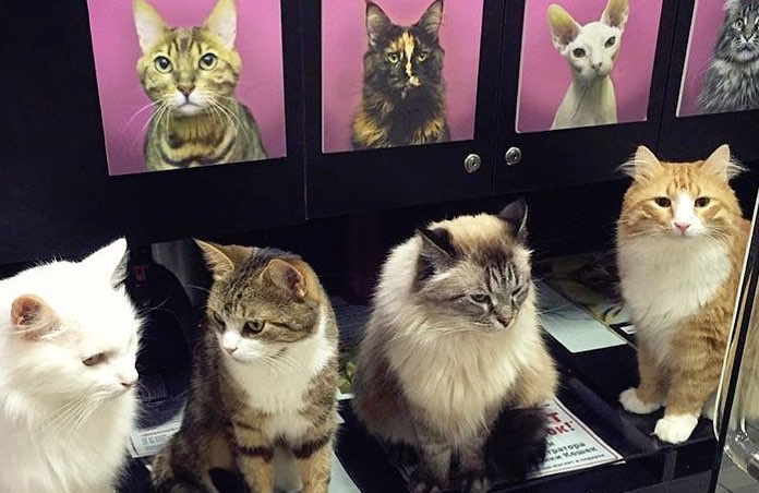 10 Best Cat Cafes To Visit On A Date