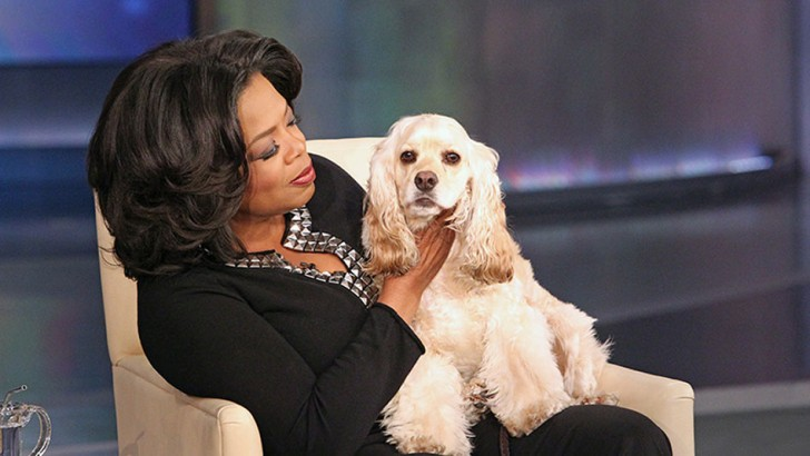 8 Celebrities, Who Are Obsessed with Their Dogs 23