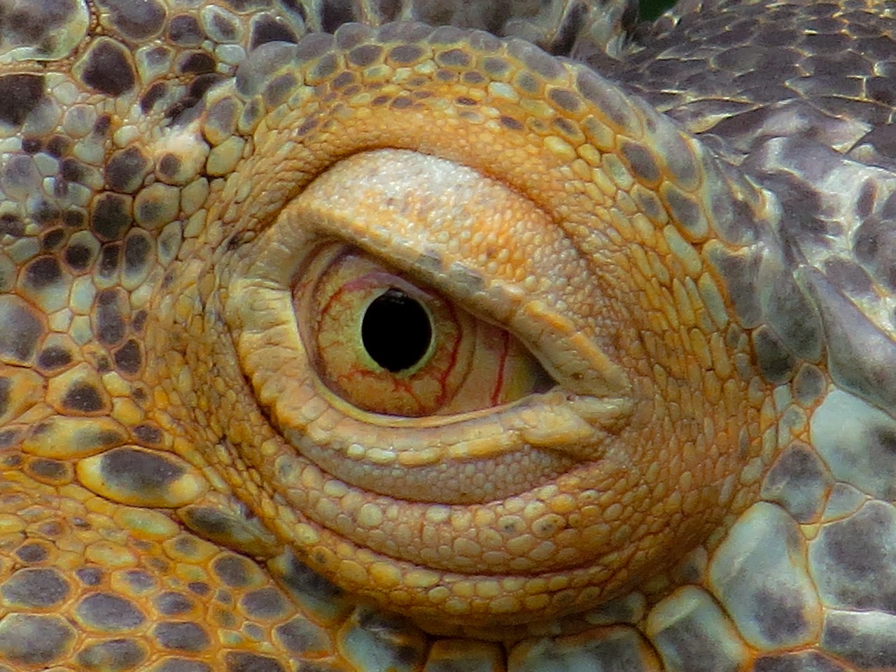 Ten Fascinating Facts About Reptiles