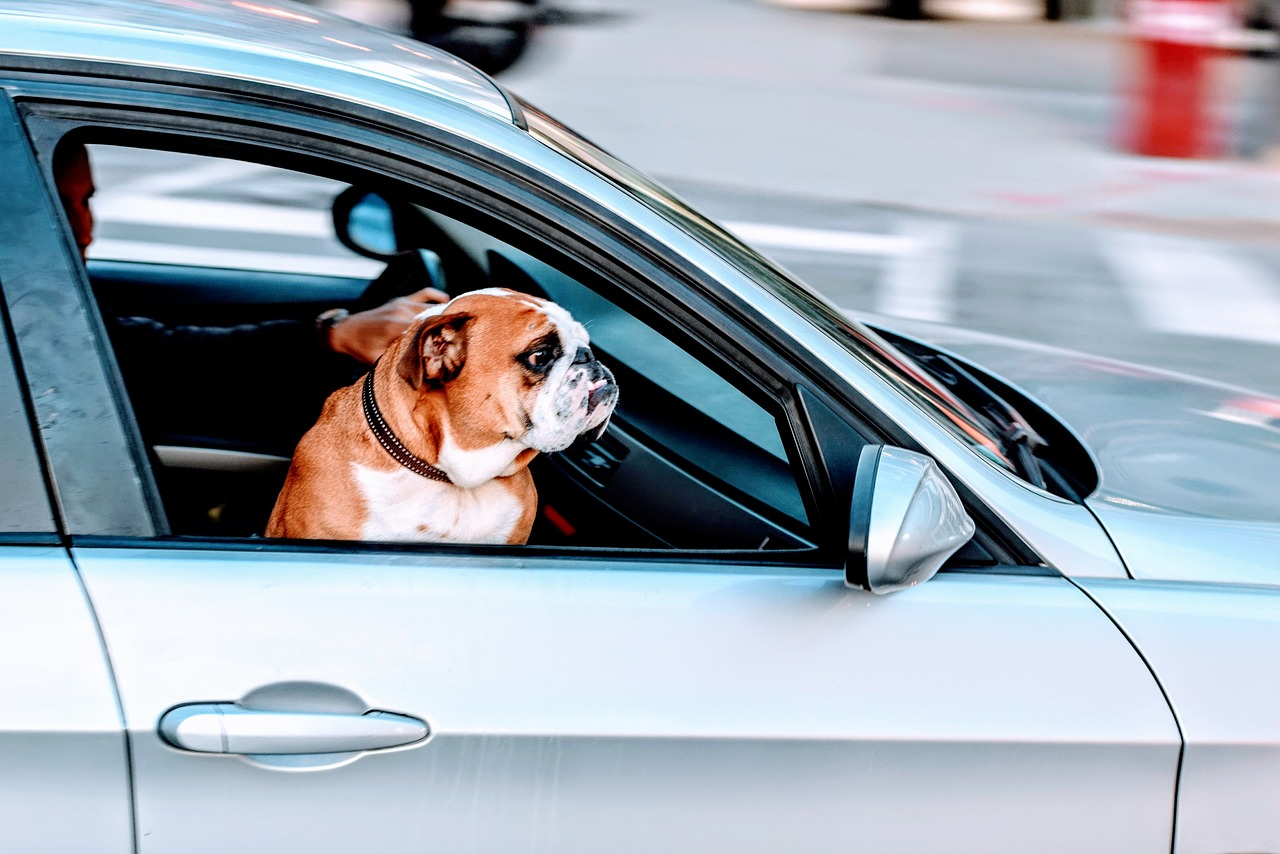 Taking Your Pooch On Vacation? Here's What You Need To Do