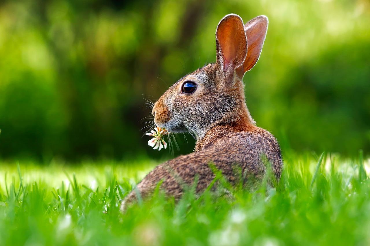 Common Rabbit Diseases