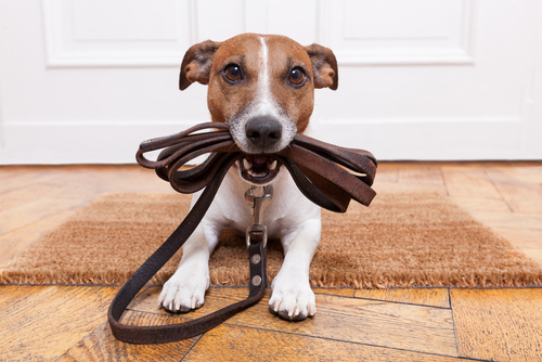 Harness vs Collar: Which One is Better for Your Dog? 10