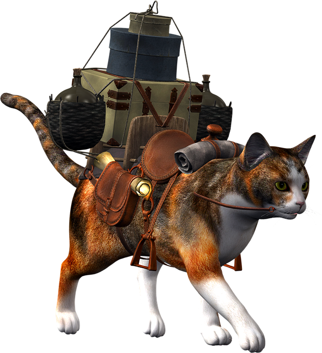 Do You Know How To Transport Pets? 11