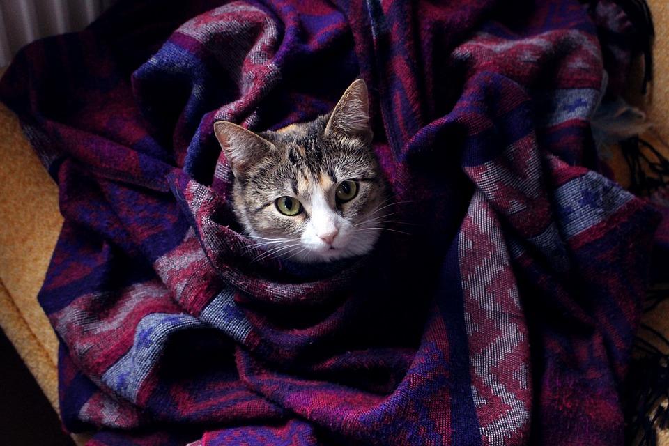 5 Advantages of Oral Flea Treatments for Cats 17