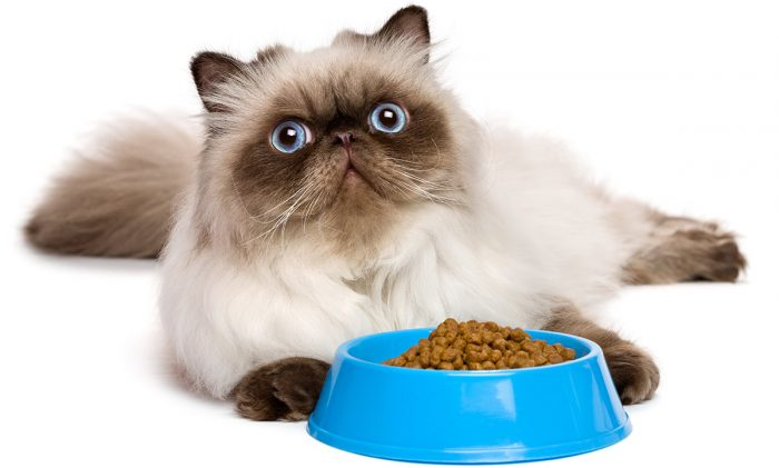 What is Really In Pet Food ? 2