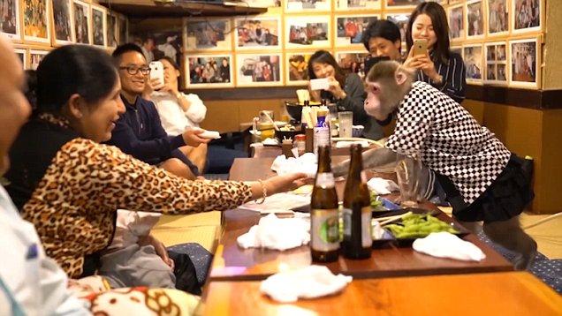 14 Best Animal Cafes Around the World