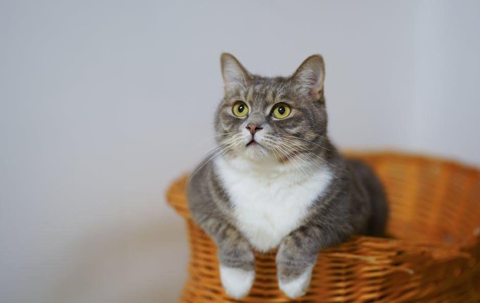 The Basics of Cat Care