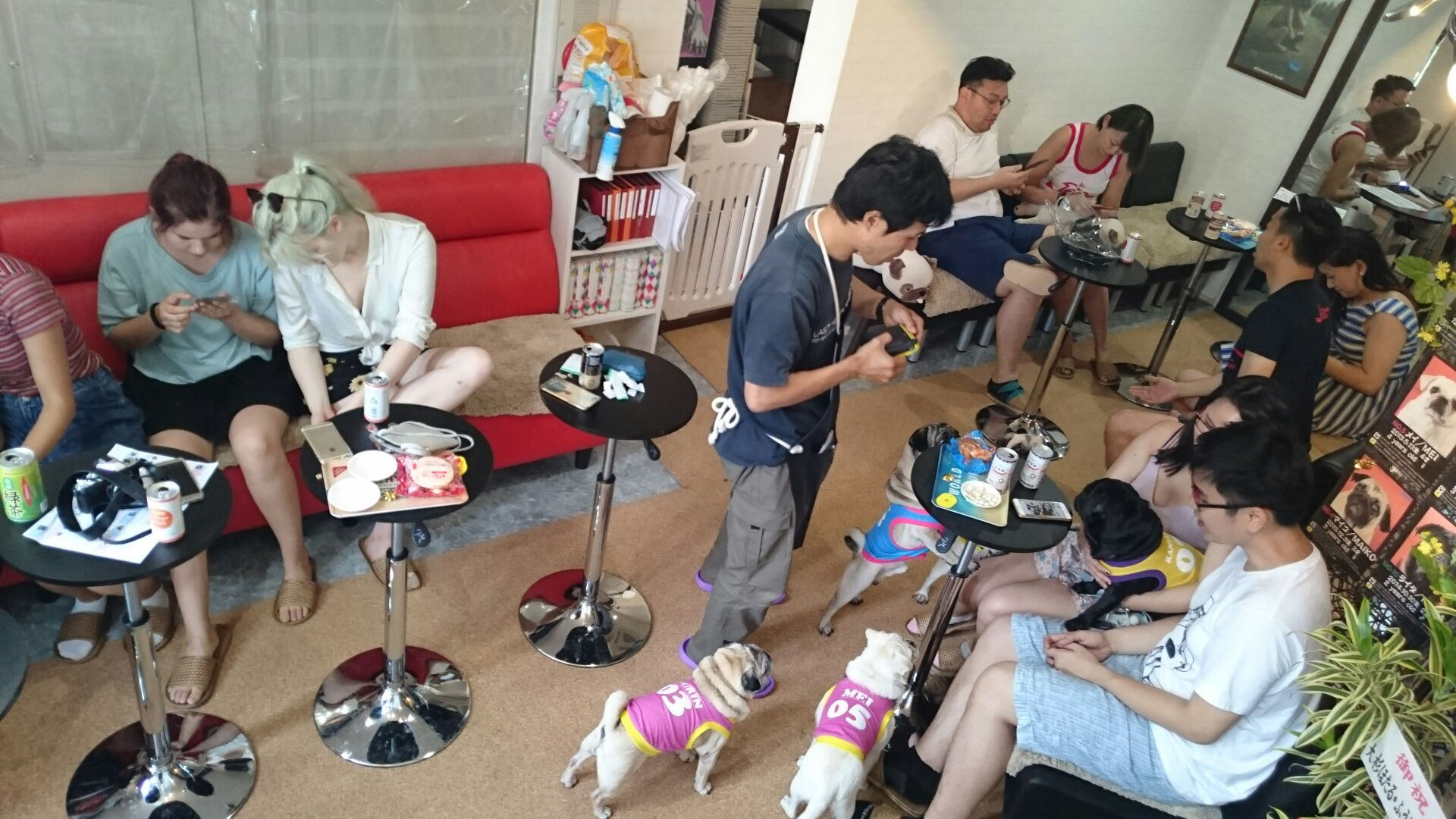 And the winner is Pug Cafe Living Room, Japan 8