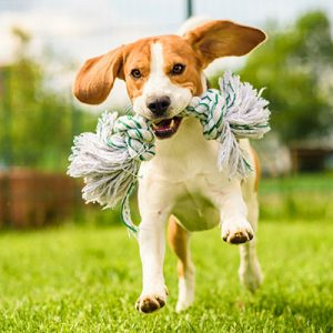 Different Categories of Toys to Get for Dog Pets