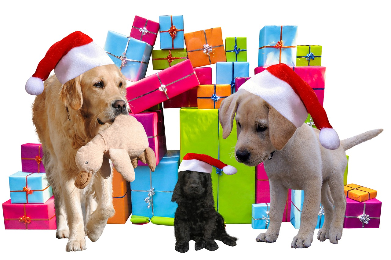Best Gifts You Can Give to Your Fur Baby