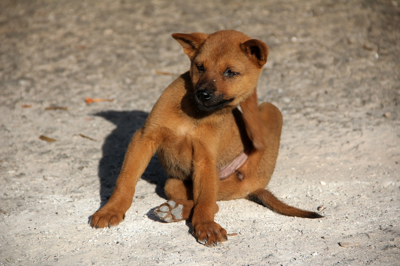 7 Tips for Getting Rid of Fleas on Dogs 16