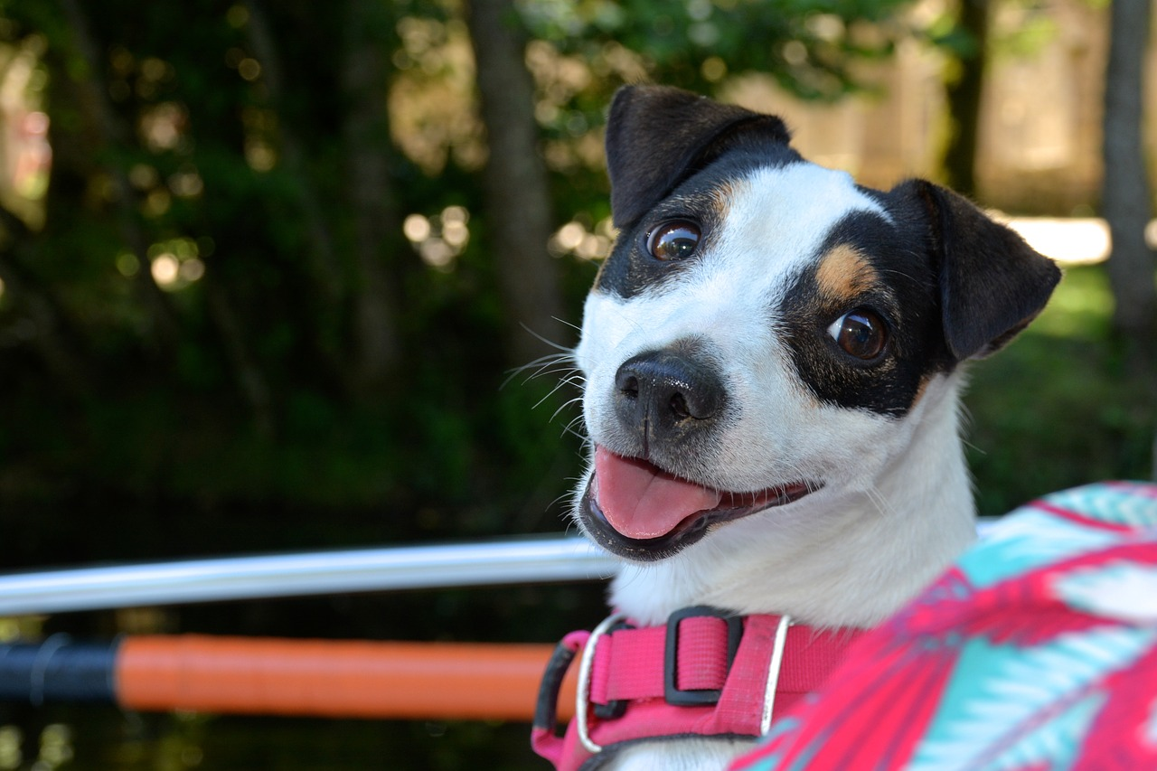 What to Know About Potential Dangers of Using a Dog Harness