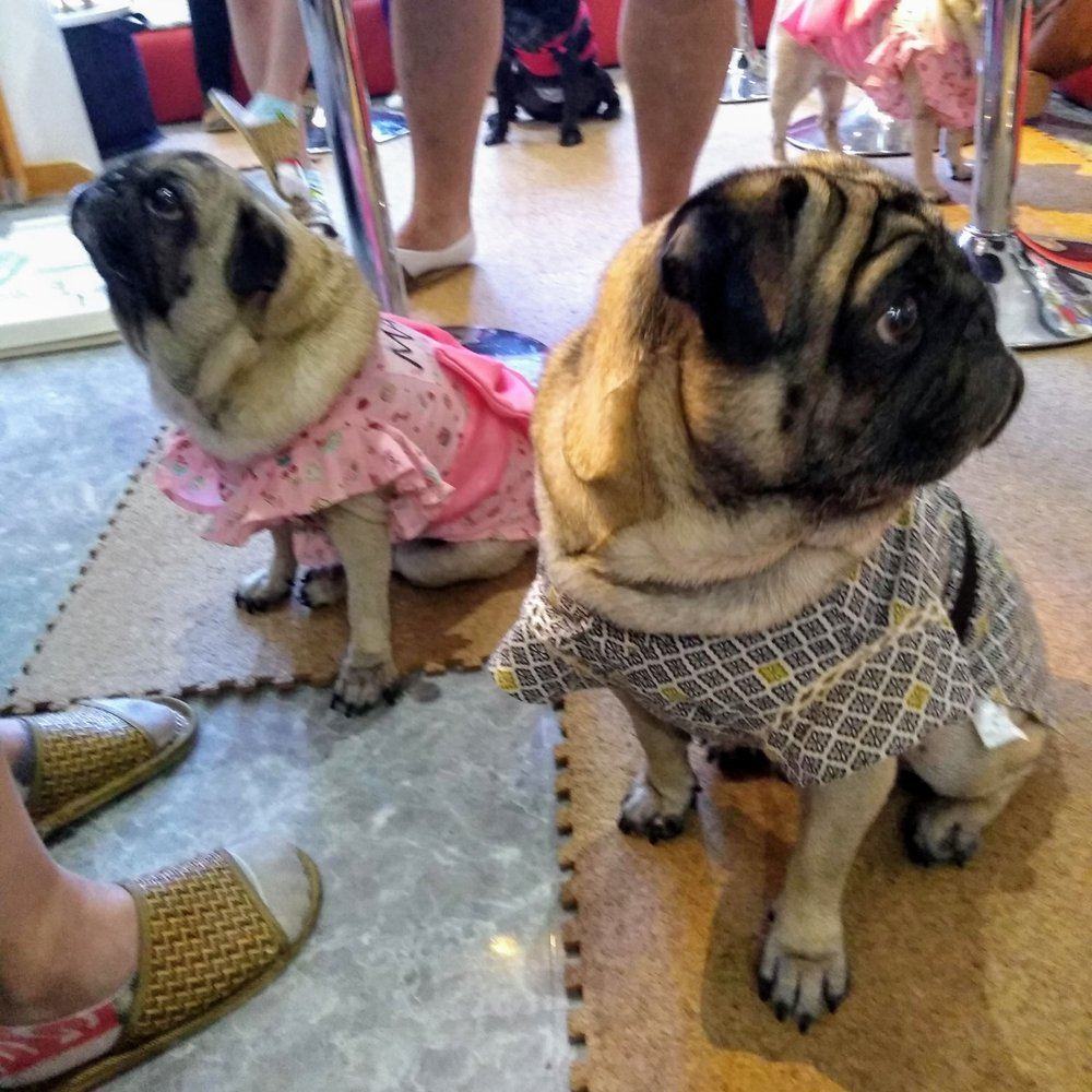 """The Pug Cafe """"Living Room"""" in Kyoto 16"""