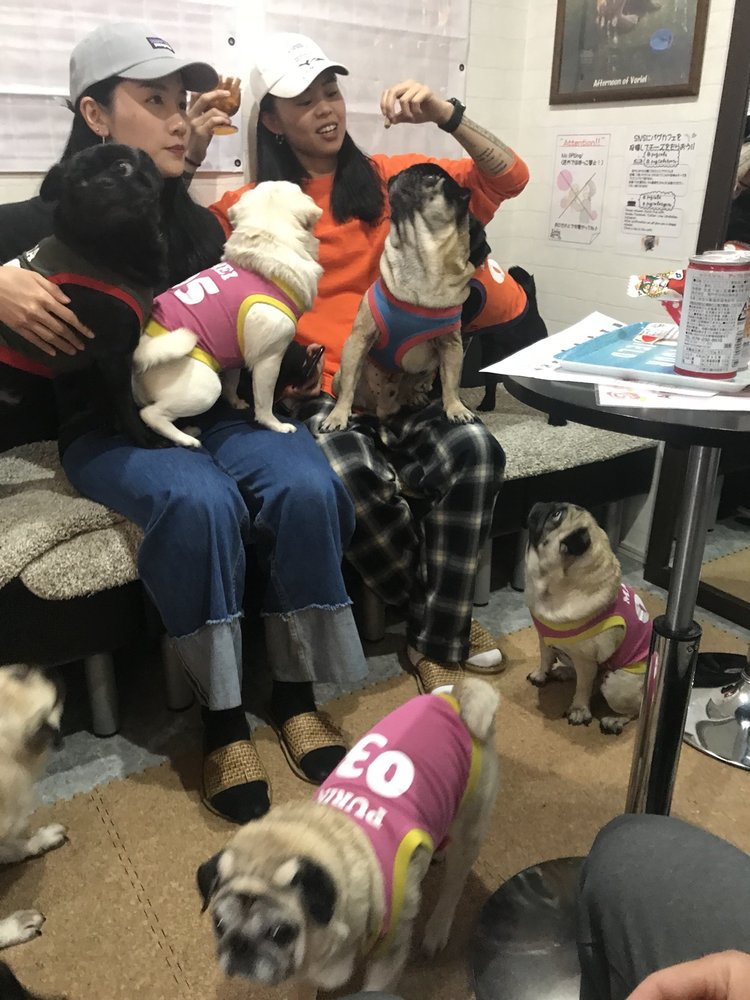 """The Pug Cafe """"Living Room"""" in Kyoto 14"""