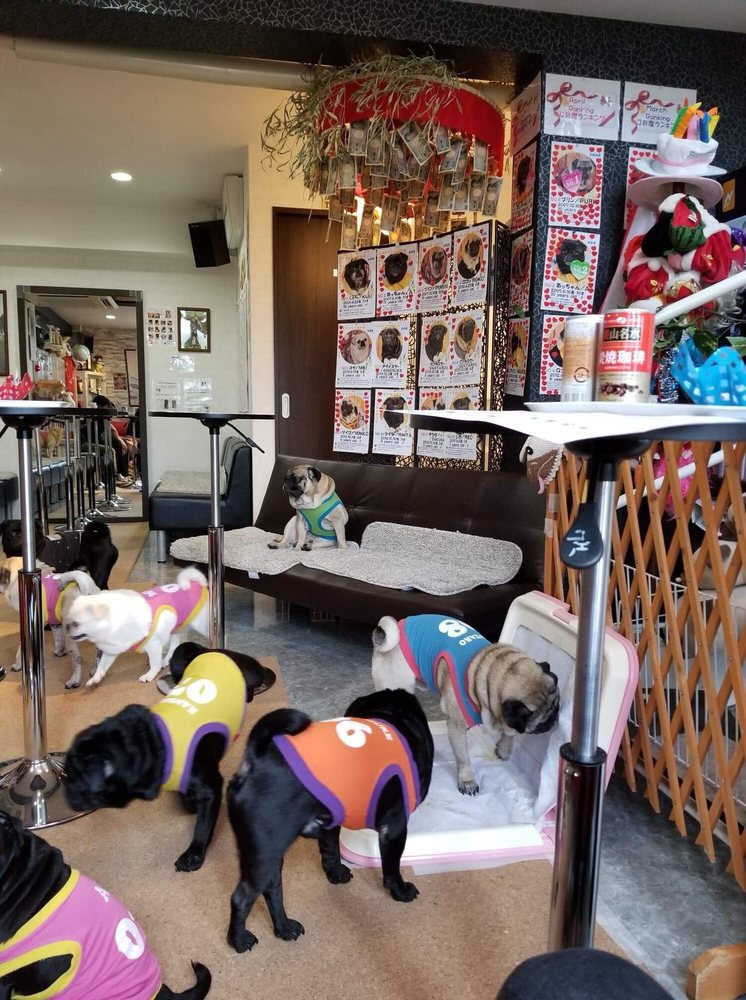 And the winner is Pug Cafe Living Room, Japan 2