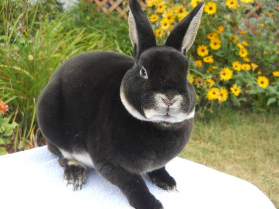 A Guide to Rabbit Food for Pet Owners 11
