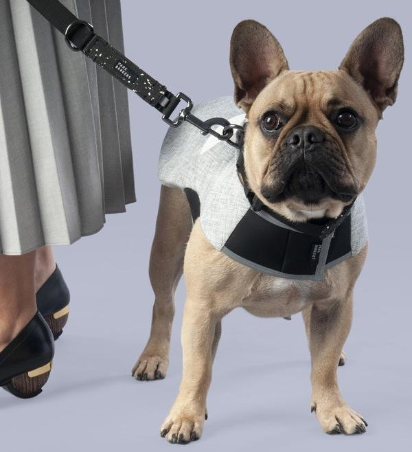 How to Train Your Dog to Walk With You 11