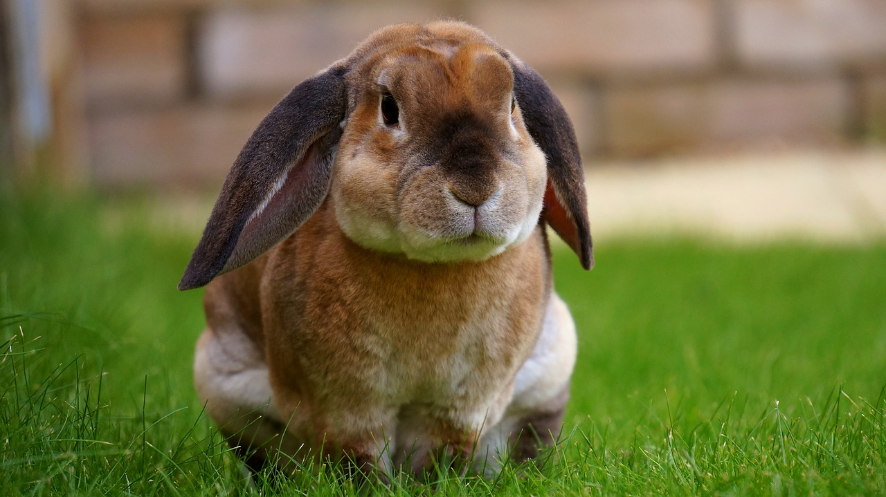 Easy Tips to Keep Your Rabbit's Weight Under Control