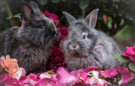 A Guide to Rabbit Food for Pet Owners 13