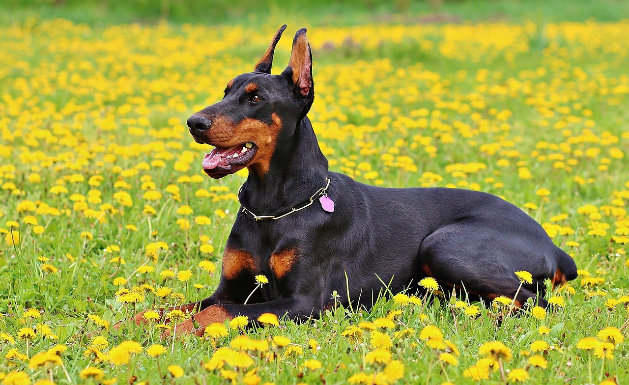 Harness vs Collar: Which One is Better for Your Dog? 9