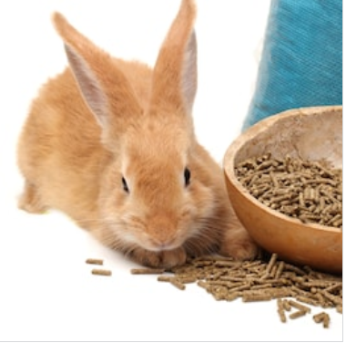 A Guide to Rabbit Food for Pet Owners