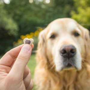 Understanding the Investment of Dog Ownership